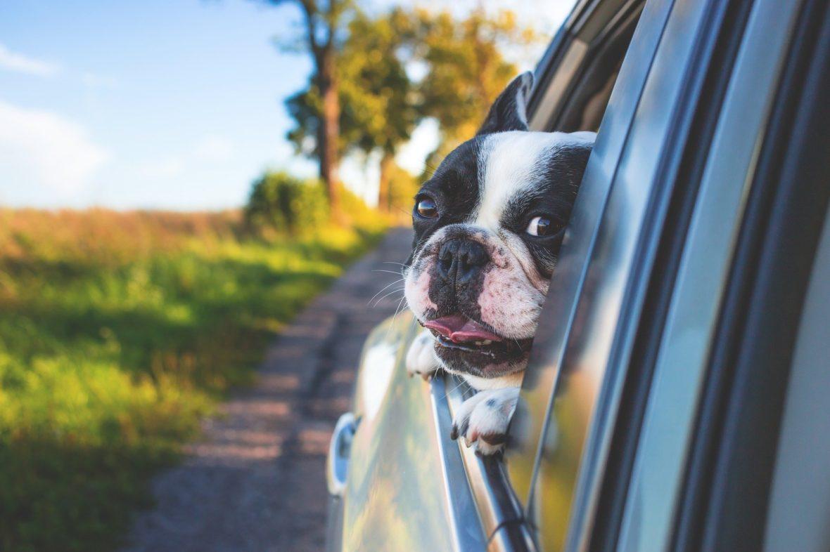 adorable 1850465 1920 1180x786 - Dog mode Tesla, la función para mascotas