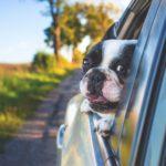 adorable 1850465 1920 150x150 - ¿Cómo recurrir una multa de tráfico?
