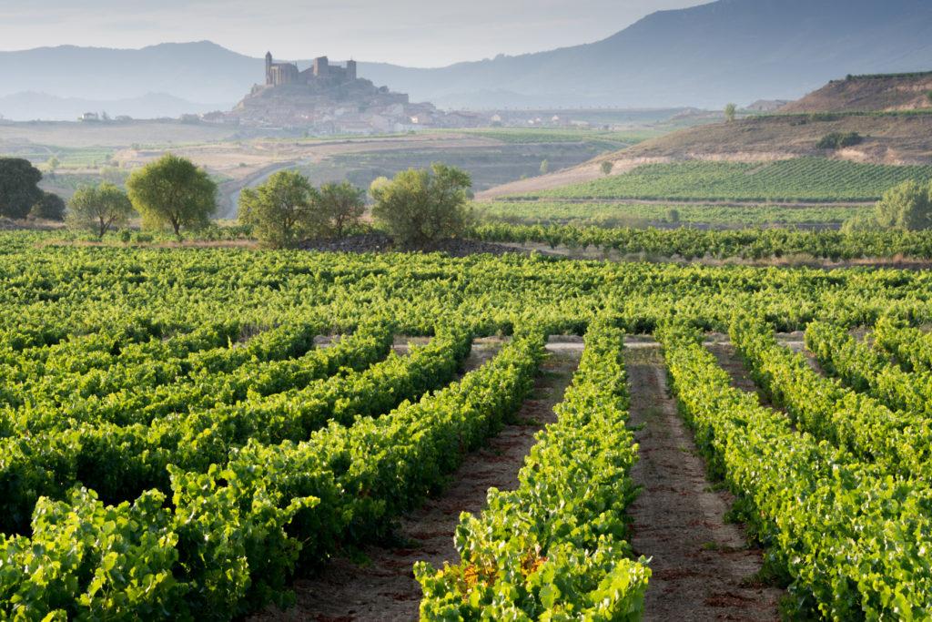 Compostela 2 logroño 1024x683 - Camino de Santiago en coche: una alternativa cómoda