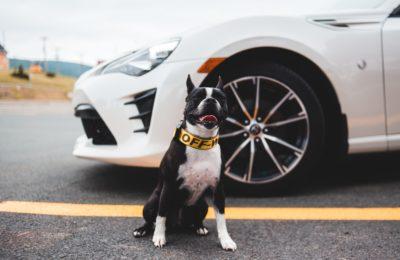 Mascota 2 400x260 - ¿Cómo debo llevar a mi mascota en el coche?